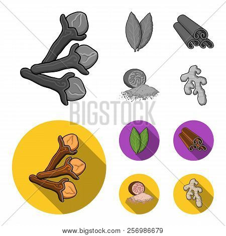 Clove, Bay Leaf, Nutmeg, Cinnamon.herbs And Spices Set Collection Icons In Monochrome, Flat Style Ve