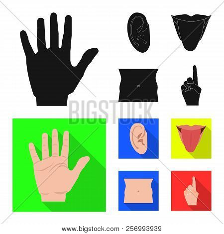 Vector Illustration Of Human And Part Sign. Set Of Human And Woman Stock Symbol For Web.