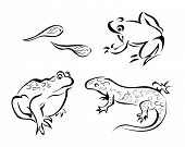 Illustration of Different Amphibians with Clipping Path poster