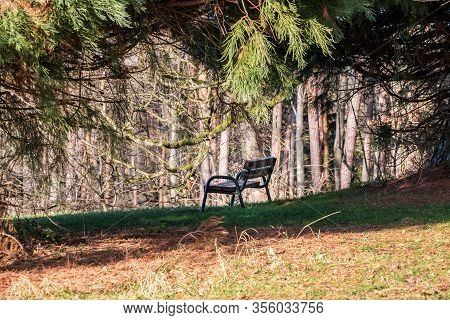 Brown Wooden Bench Under A Big Tree On The Green Grass