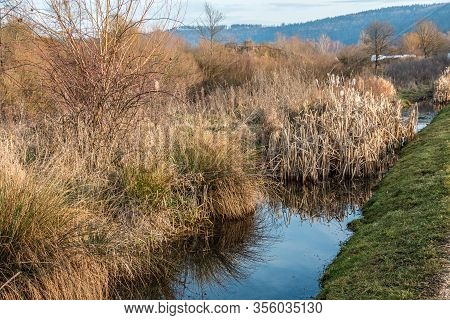 Marshland With Smelling Brackish Water And A Lot Of Reeds