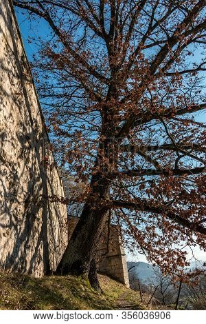 Big Tree Next To The High Walls Of A Historical Building