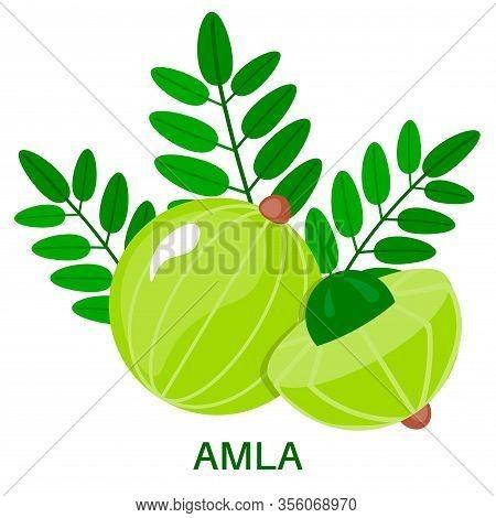 Amla Icon In Flat Style Isolated On White Background. Indian Gooseberry.  Medical Fruit. Vector Illu