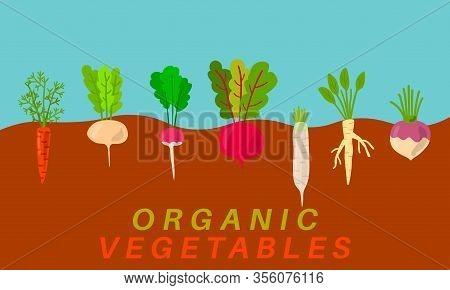 Organic Vegetables Garden Growing. Vegetable Gardening Sketch. Plants Showing Root Structure Below G