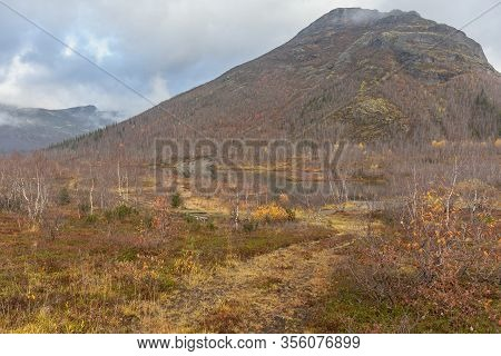 Colorful Yellow Dwarf Birches On The Background Of The Northern Foggy Mountains In Autumn Tundra, Ar