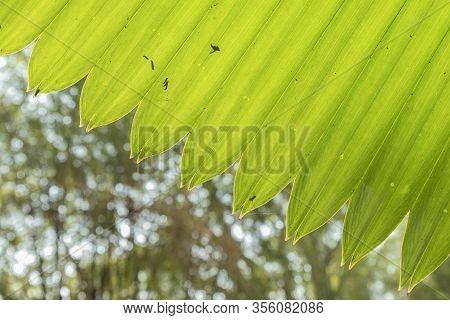 Close Up Green Palm Leaf Pattern Background Under Sunshine