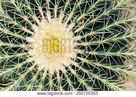 Thorn Cactus Closeup. Green Succulent Plant Texture About Window. Natural Background With Exotic Flo