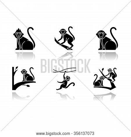 Monkeys In Wild Drop Shadow Black Glyph Icons Set. Tropical Country Animal, Mammal On Trees. Explori