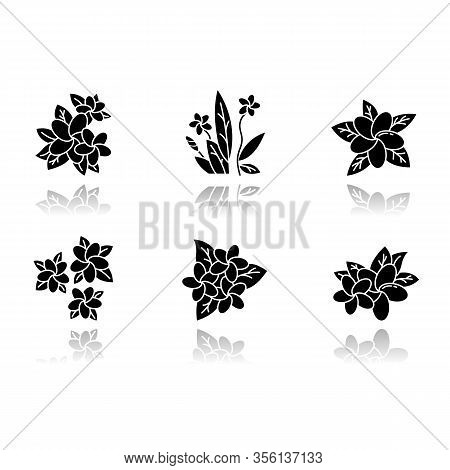Plumeria Drop Shadow Black Glyph Icons Set. Exotic Region Flowers. Flora Of Indonesian Islands. Smal