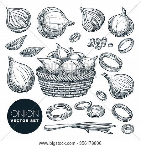 Onion Head And Green Feathers, Isolated On White Background. Sketch Vector Illustration. Fresh Spice