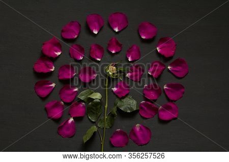 Beautiful Flower Mandala Of Pink And Red Roses On Black Dark Background. Geometrical Floral Composit