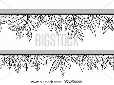 Seamless Floral Pattern With Laurel Bay Leaves Black Contours Isolated On White Background. Vector