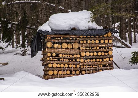Woodpile Produces Extraordinary Symmetries On The Edge Of The Forest, Covered With Snow