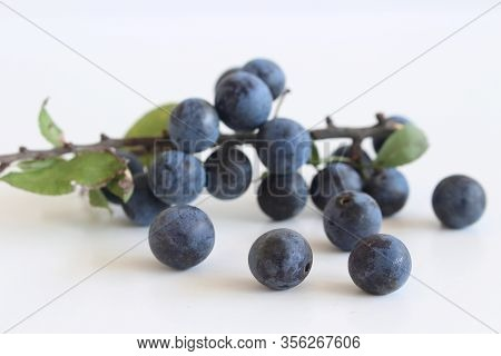 Romantic Autumn Still Life With Blackthorn Or Sloe On A White Wooden Table.nature Concept. Prunus Sp