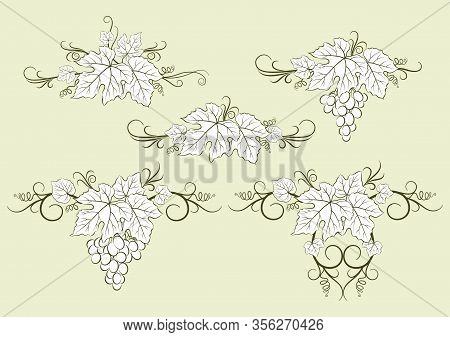 Set Of Plant Pictograms, Grape Berries And Leaves Contours. Vector