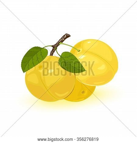 Three Ripe Yellow Myrobalan Or Cherry Plums Are On Brunch With Green Leaves. Edible Juicy Fruit With