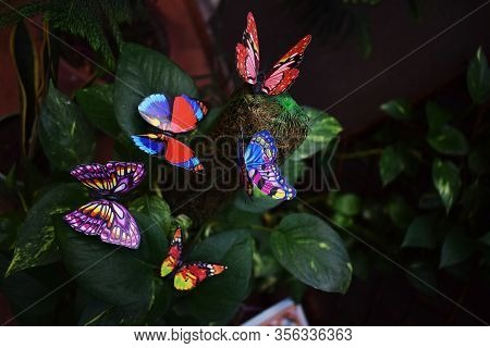 Assorted Colorful Butterflies For Garden Decoration On Coir Stick Pole Moss Plant Support On Pathos