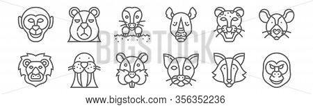 Set Of 12 Animal Head Icons. Outline Thin Line Icons Such As Gorilla, Cat, Walrus, Jaguar, Mole, Bea