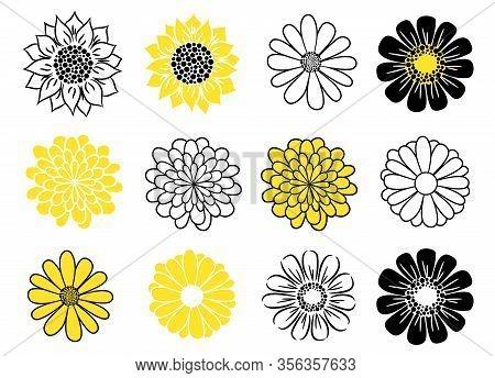 Flower Head Vector Icon Set. Daisy, Sunflower And Golden-daisy Plants.