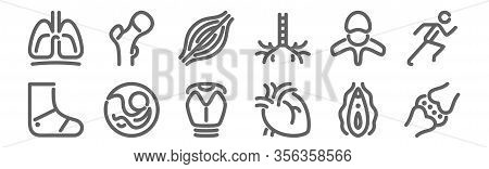 Set Of 12 Anatomy Icons. Outline Thin Line Icons Such As Cartilage, Heart, Pregnancy, Vertebra, Musc