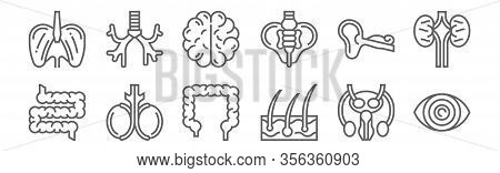 Set Of 12 Human Organs Icons. Outline Thin Line Icons Such As Eye, Epidermis, Testicles, Ear, Brain,