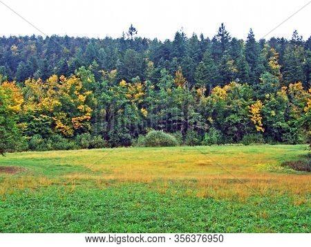 Mixed Forests And Trees In The Rakov Skocjan Valley (rakek Or Notranjski Regijski Park Rakov Škocjan
