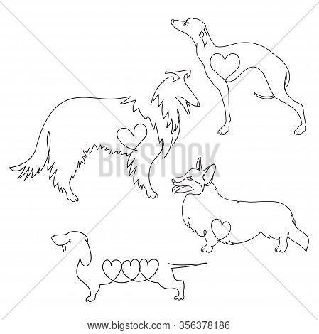 Set Of Four Different Dog Breeds. Corgi, Dachshund, Collie And Greyhound.