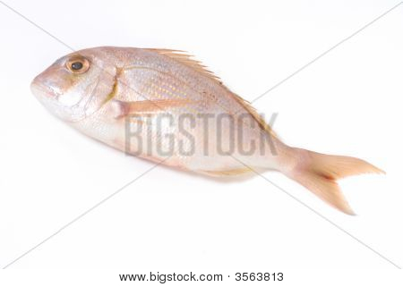 Delicious Red Fish