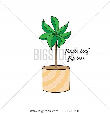 Fiddle Leaf Fig Tree Vector Illustration Graphic. Hand Drawn Cute Outlined Indoor Plant In Pot. Isol