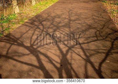 A Shadow Of A Leafless Tree On A Blacktop Pathway In A Park