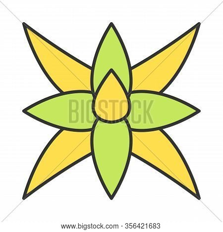 Fox Tail Agave Color Icon. South America Desert Plant. Agave Attenuata. Exotic Flower. Isolated Vect
