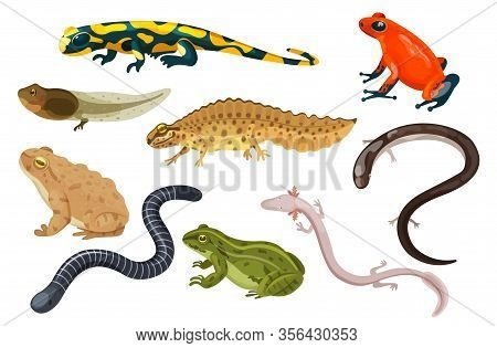 Amphibian Vector Illustration Set. Exotic Cartoon Tropical Amphibia, Colorful Sitting Toad And Frog