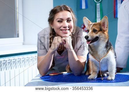 Professional Vet Funny Female Doctor Examines A Small Adult Dog. Caucasian Cute Pretty Female Vet Wo