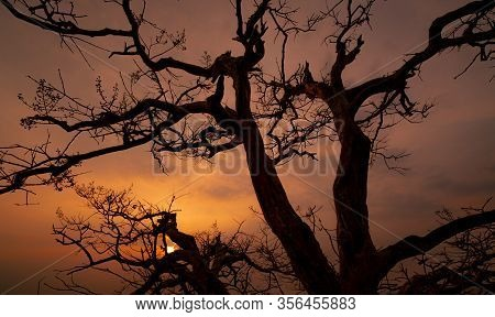Beautiful Silhouette Leafless Tree And Sunset Sky. Calm And Peaceful Scene Of Sun, And Dark Sky At S