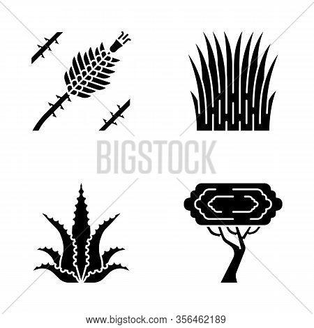 Desert Plants Glyph Icons Set. Exotic Flora. Ocotillo, Mexican Thread Grass, Aloe Vera, Palo Verde T