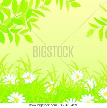Natural Spring Background With Green Tree Branches Over Beautiful White Flowers Among Thick Green Gr