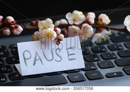 A Branch Of Blooming Apricots Lies On A Laptop Keyboard And The Word Pause On A White Sheet