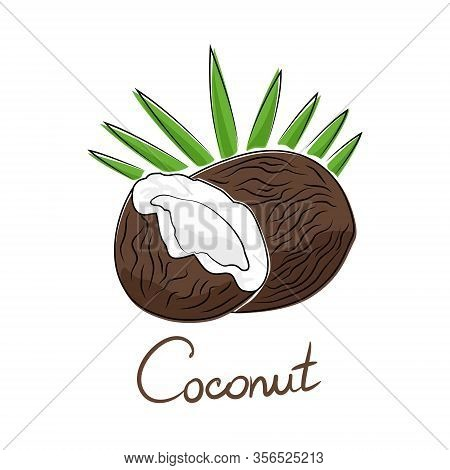 Brown Coconut And Text Coconut, Tropical Fruit Isolated On White Background, Vector Illustration