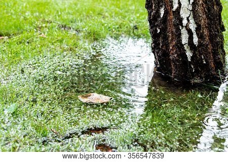 Garden Bushes, Tree And Green Grass Lawn Covered With Water Due To Snow Melting Thaw And Flash High