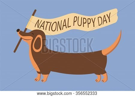 Merry Dachshund Carries A Flag With The Inscription National Puppy Day. Lovely Animal, People Best F