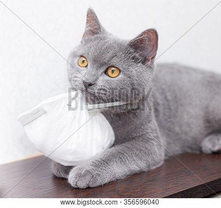 Grey Cat In A Medical Mask . Animal Health. Coronavirus. Coronavirus Disease In Cats And Animals . R