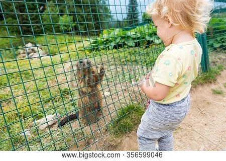 Cute Blonde Girl Looking At A Wild Marmot In Captivity.