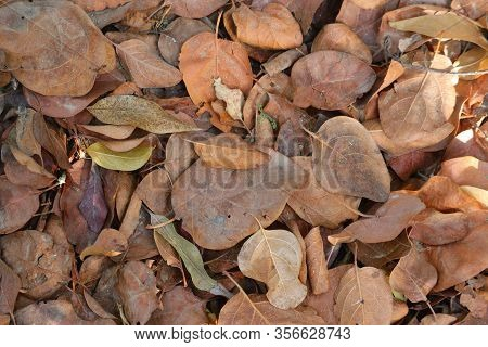 Autumn Leaves, Texture Of Autumn Leaves Fall Down On Way,dry Leaf Texture Or Leaf Background. Close