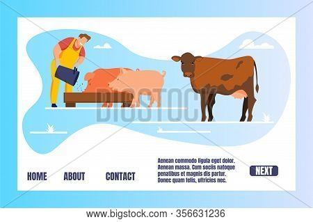 Animal Husbandry Horizontal Banner. Man Feeding Pigs And Cow Putting Grain In Trough Farmer Caring O