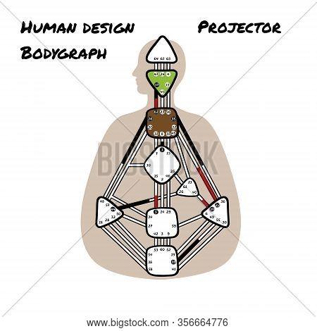 Projector. Human Design Bodygraph. Nine Colored Energy Centers