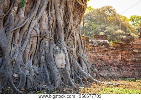 Buddha Head In Tree Roots At Wat Mahathat Temple Ayutthaya Thailand. Is The Most Popular Place For F
