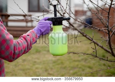 Pesticide Treatment, Pest Control, Insect Extermination On Fruit Trees In The Garden, Spraying Poiso