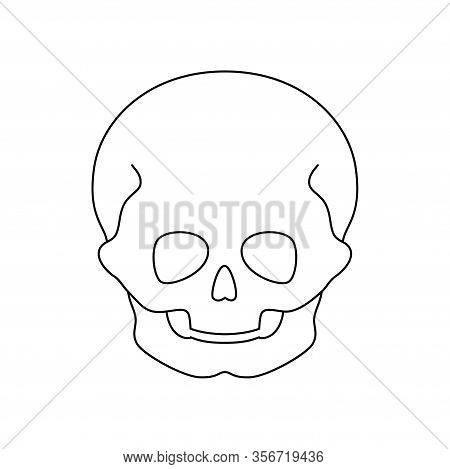 Human Child Skull Anatomy. Flat Vector Medical Illustration Isolated. Structure Of Kid Facial Skelet