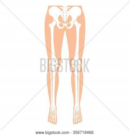 Human Leg Bones Anatomy. Hip, Knee, Pelvis,femur, Foot, Toe, Joint Symbol. Vector Flat Concept Illus