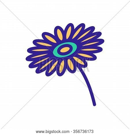 Beautiful Chrysanthemum Icon Vector. Beautiful Chrysanthemum Sign. Color Isolated Symbol Illustratio